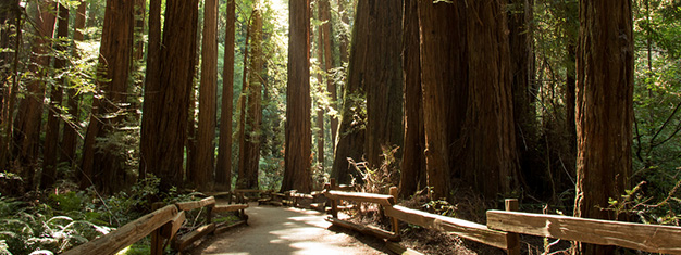 Muir Woods, home of the Ewoks in Return of the Jedi.